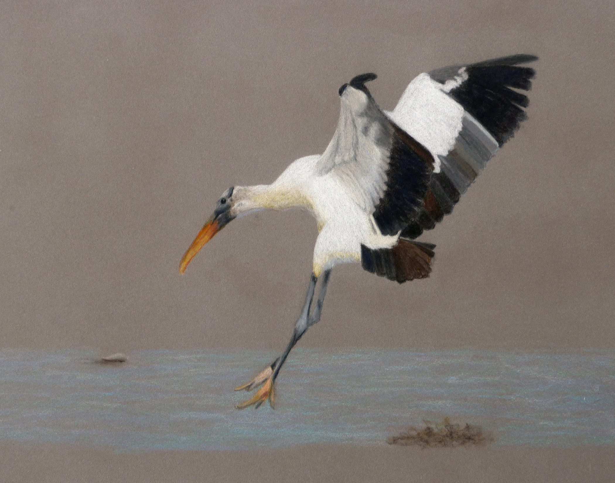 coming down to earth painting for the st augustine art association wildlife exhibit