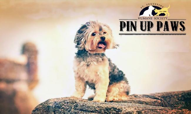 pin up paws calendar st augustine humane society