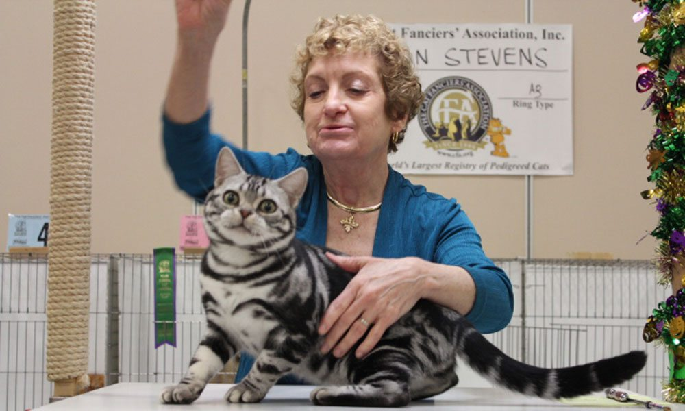 ancient city cat show st augustine