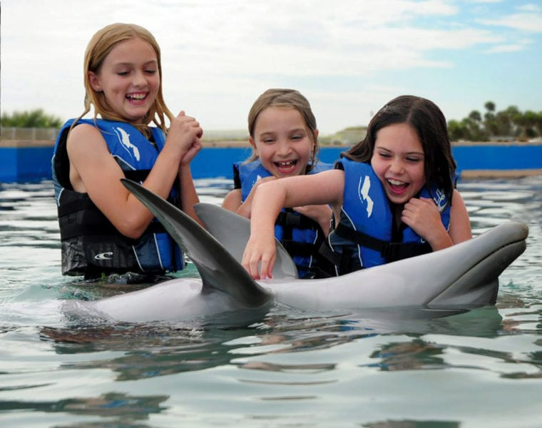 Kids Dolphins