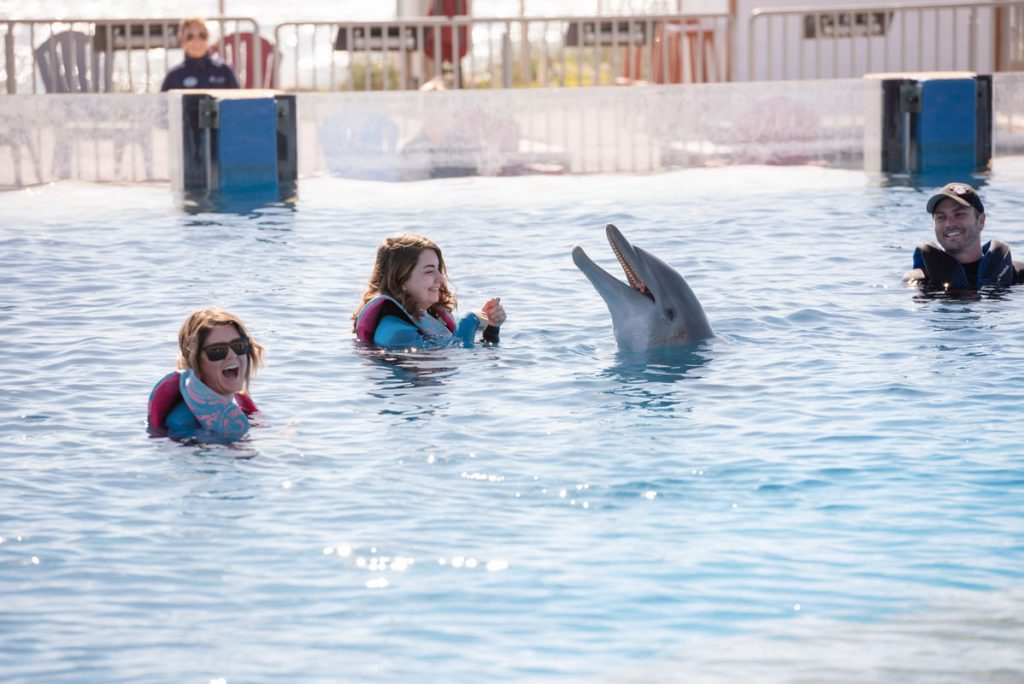 dolphin encounter at marineland dolphin adventure