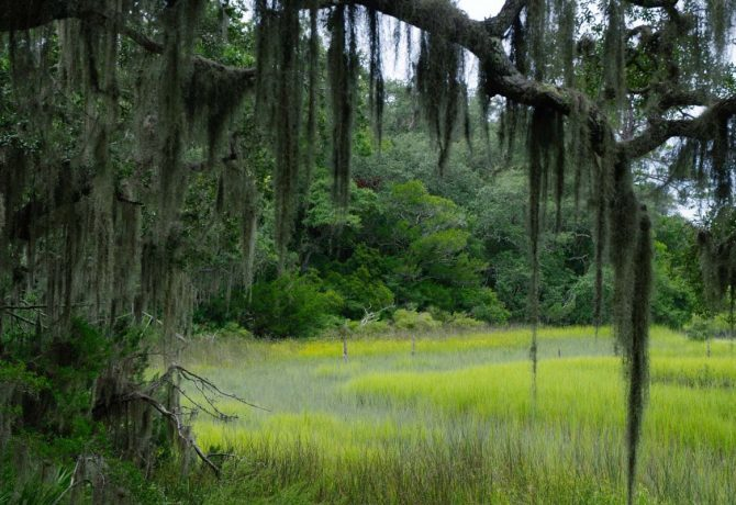 7 St. Augustine Talks and Tours to Get You in Touch with Nature
