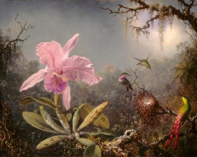 flora and fauna and folklore at the st augustine art association