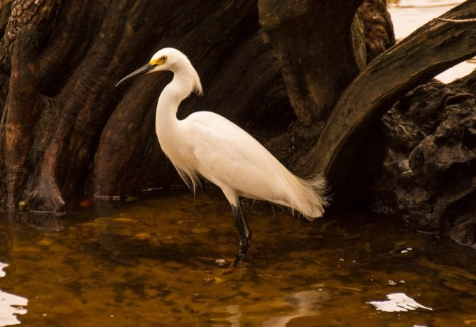 egret st johns county parks and recreation