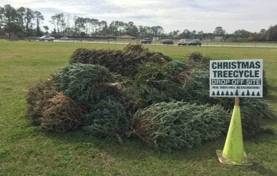 christmas tree recyling program in st johns county