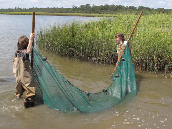 Family Seining Event St. Augustine