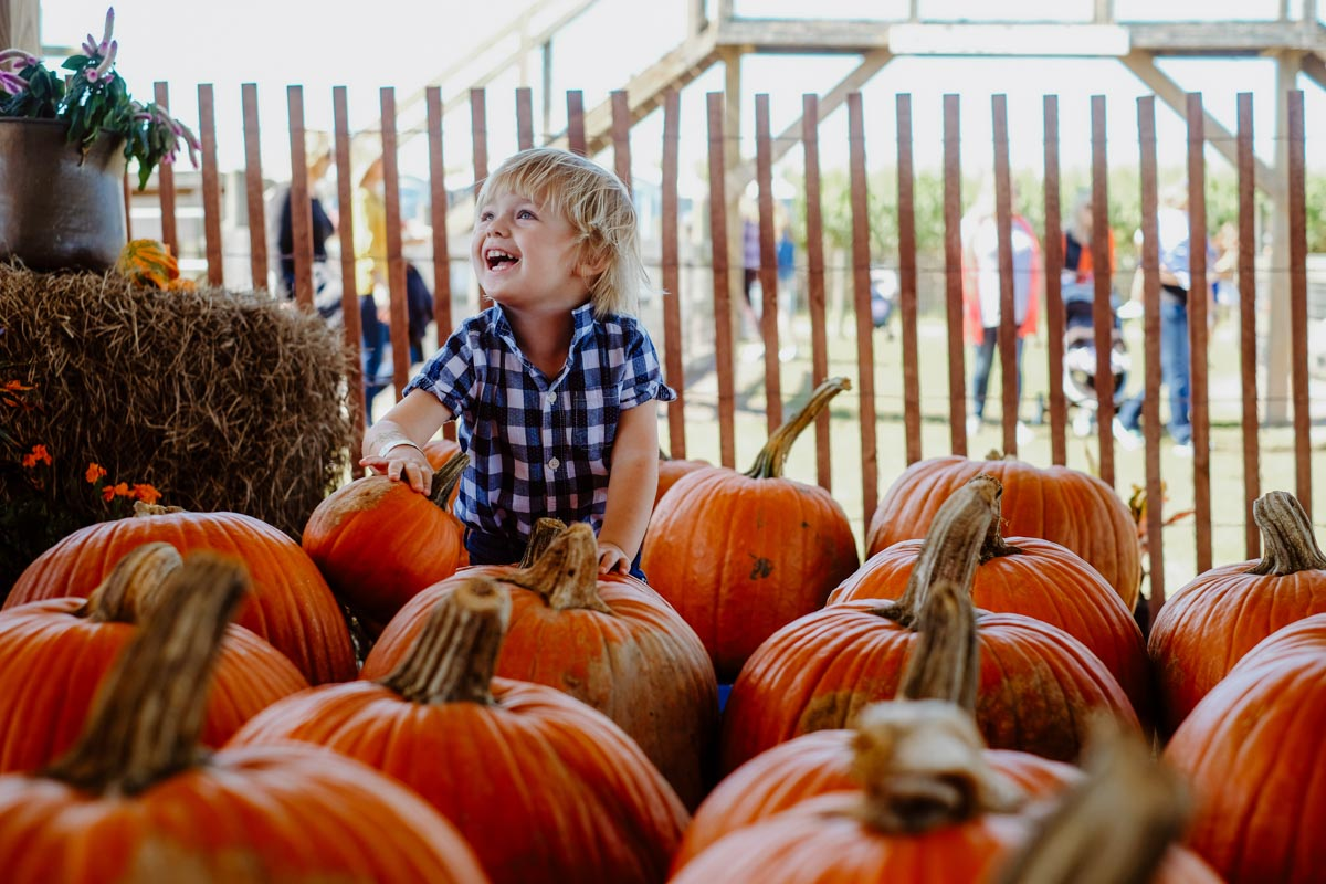 child in a sykes and cooper corn maze pumpkin patch