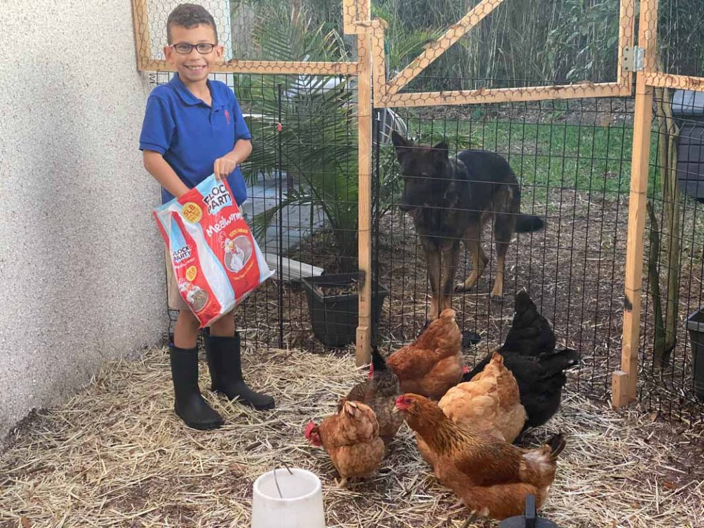 cole wildasin gets ready to feed his chickens in st augustine backyard