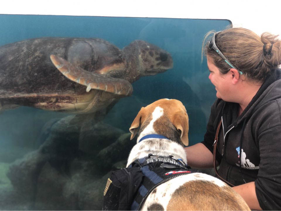 k9s for warriors trainees meet animals at marineland